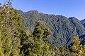 Diedrichs Range, West Coast Region, New Zealand 07.jpg