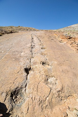 Torotoro National Park - Image: Dinosaur footprints in Toro Toro Bolivia