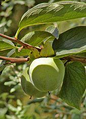 Plant Defense Against Herbivory Wikipedia