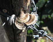 Fungi on a fence post near Orosí, Costa Rica.