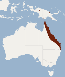 Distribution of Nyctophilus bifax.png