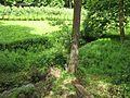 Dolní koželský rybník (006).jpg
