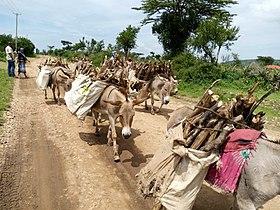 Donkey Transportation.jpg