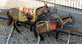 Donkey trail - Fira - Thira - to Mesa Gialos port - Santorini - Greece - 01.jpg