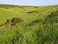 Downland. Chaldon Herring - geograph.org.uk - 848198.jpg