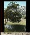 ETH-BIB-Ajaccio, Corsica, Citronenbaum mit Windform-Dia 247-11958.tif