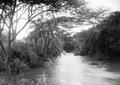ETH-BIB-Bachvegetation am Makungu-River-Kilimanjaroflug 1929-30-LBS MH02-07-0459.tif