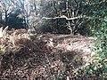 Earthwork enclosures, Oare Common, Berkshire 08.jpg