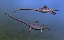 Drawing of two greenish elasmosaurs underwater with a blue background.
