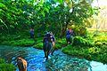 Elephant Safari at Jaldapara 2.jpg