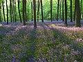 Embley Wood - geograph.org.uk - 800698.jpg