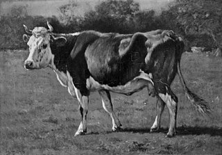 Study of a Cow