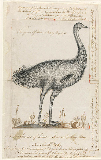 Journals of the First Fleet - Drawing of an emu from his journal