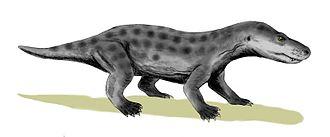 1931 in paleontology - Ericiolacerta