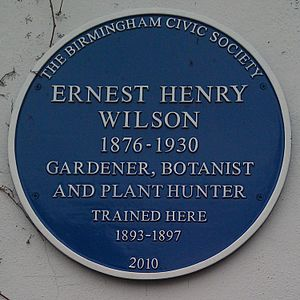 Ernest Henry Wilson - Blue plaque at Birmingham Botanical Gardens