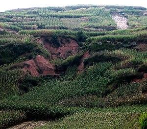 Perennial rice - Erosion gulleys on unterraced hill farm in Yunnan Province