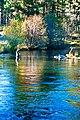 FISHERMAN AT METOLIUS RIVER DESCHUTES (25130408165).jpg