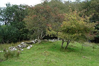 Irish folklore - Fairy Trees near Greenan. According to fairy lore, the hawthorn tree, also known as a fairy tree, is said to mark the territory of the fairies.
