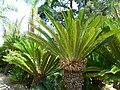 Fale - Giardini Botanici Hanbury in Ventimiglia - 633.jpg