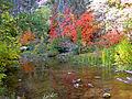 Fall Colors in West Fork - 2010 (5178440909).jpg