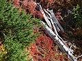 Fall colors (00178279b65548dfb3835c91ae5974c5).JPG