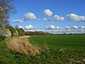 Farmland, Arborfield - geograph.org.uk - 1253390.jpg
