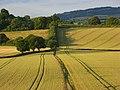 Farmland, Bledlow - geograph.org.uk - 892920.jpg