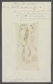Fasciola scabra - - Print - Iconographia Zoologica - Special Collections University of Amsterdam - UBAINV0274 105 12 0002.tif