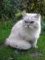 Fat Cat (5003308677).jpg