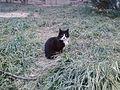 Feral cat in Beijing03.JPG