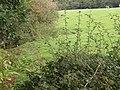 Field alongside Stubs Beck, Scholes, Cleckheaton - geograph.org.uk - 235658.jpg