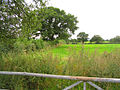 Field near Oldcastle Heath - geograph.org.uk - 232771.jpg