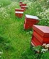 Fieldside hives near Arram - geograph.org.uk - 834144.jpg