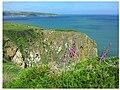Fingerhut an der Küste bei Fishguard, Wales.jpg