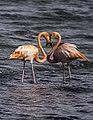 Flamingo Heart.jpg