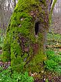 Flickr - Nicholas T - Shenks Ferry Wildflower Preserve (4).jpg