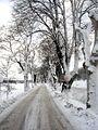 Flickr - Per Ola Wiberg ~ mostly away - Allén i vinterskrud (avenue in winterdress).jpg
