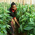 Flickr - usaid.africa - Chairwoman Rose Peter of the Upendo Women Growers Association.jpg