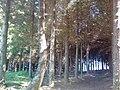 Floresta Negra 2016 04 25.jpg