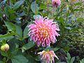 Flower bloom.jpg