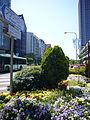 Flower road01 2816.jpg