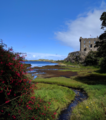 Flowers blooming outside Dunvegan Castle during summer.png