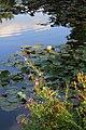 Flowers over the pond in Myddelton House Gardens, Enfield.jpg