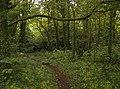 Footpath in Hareland Plantation - geograph.org.uk - 580358.jpg