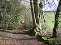 Footpath through Markwells Wood - geograph.org.uk - 353915.jpg