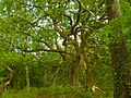 Forêt des Landes, merveilleux sous-bois.jpg