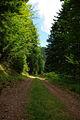Forêt vosgienne dans la région entre Lutzelhouse, Urmatt et Oberhaslach, Bas-Rhin.jpg