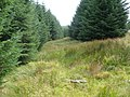 Forest Break on Darnarroch Fell - geograph.org.uk - 561335.jpg