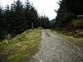 Forest Track Near Ardgartan - geograph.org.uk - 1284507.jpg