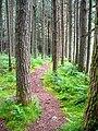 Forest Walk Near Allt a' Choire Dheirg - geograph.org.uk - 491256.jpg